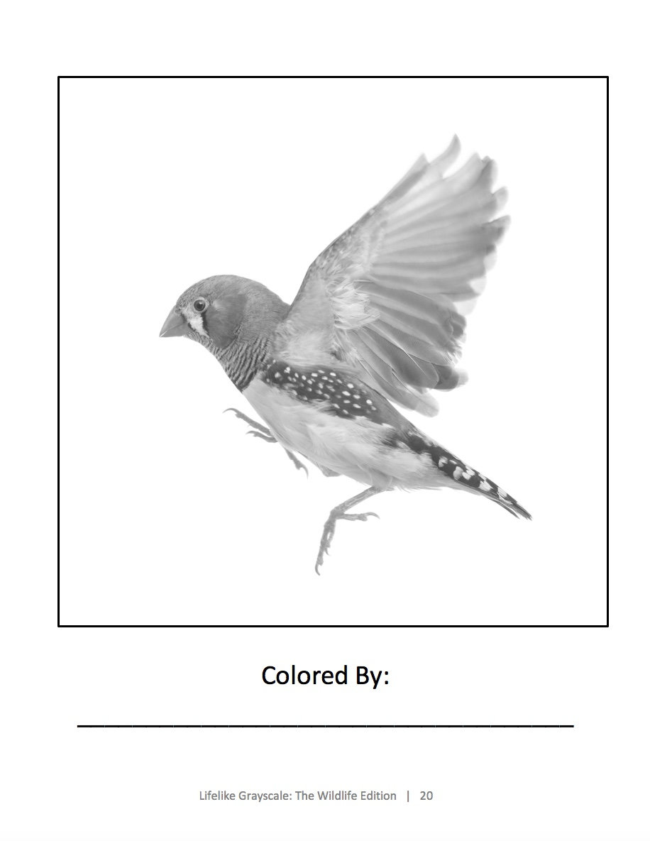 Lifelike Wildlife Grayscale Sample Page